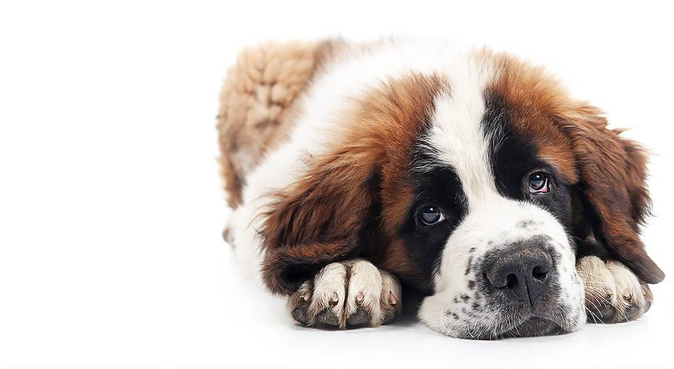 JET-A-PET - Pet Transportation, Pet Shipping, Pet Travel