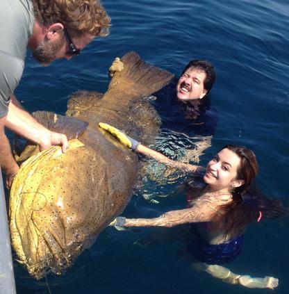 Sanibel offshore deep sea and inshore bay fishing for Deep sea fishing seattle