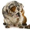 Pet Odor and Stain Removal Lawrence, Kansas