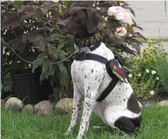Trainers of Willow, the first gluten detection dog in the US