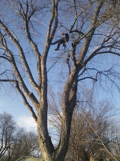 ISA Certified Arborist performing tree trimming services for a customer in Omaha NE