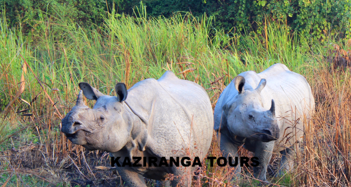 Kaziranga and Nameri National Park