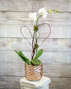 Single Stemmed Orchid