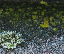 roof lichen, roof algae, gloeocapsa magma, green algae, exterior cleaning