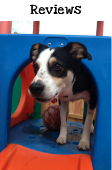 doggie daycare and overnight boarding in south buffalo