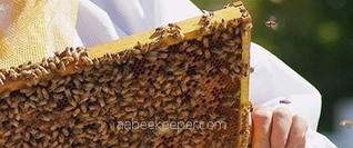 Newport Beach Bee services