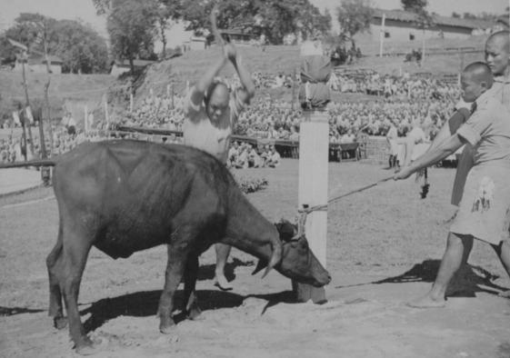 Kukri being used to behead a water buffalo in 1945