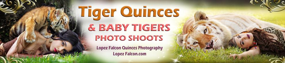 QUINCEANERA SHOW IN MIAMI QUINCEANERA WITH TIGERS BABY TIGERS PHOTO SHOOT