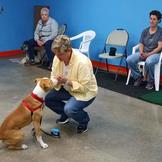 Dog training in Eden Prairie, MN