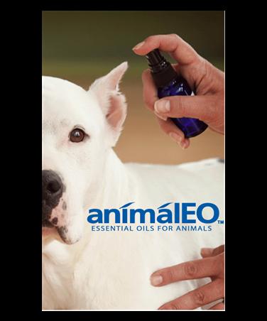 Canine Ear Spray