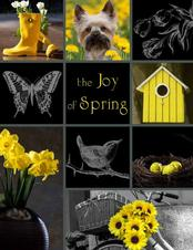 Joy of Spring Fundraiser Brochure