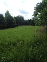 imperial clover food plot
