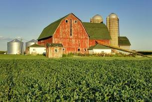Image of farm scene with red barn and corn fields