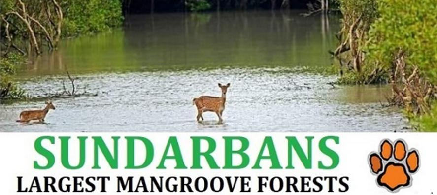 Sundarban Tour Package Sunderban National Park Jungle From Kolkata forest near kolkata