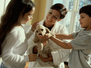 Puppy Training in New York City & Westchester