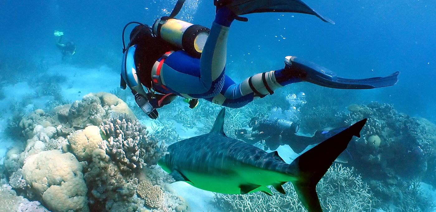 Port Diver Scuba Diving Dive Training Repairsales