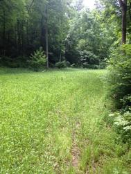 cereal rye food plot