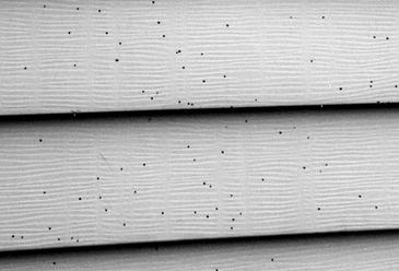 artillery fungus on vinyl siding