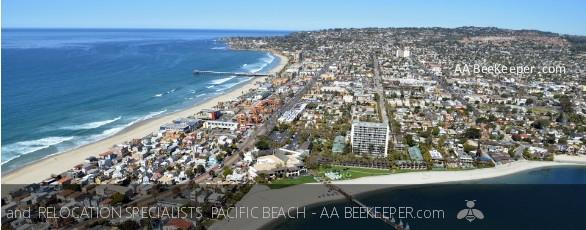 Pacific Beach Bee Removal