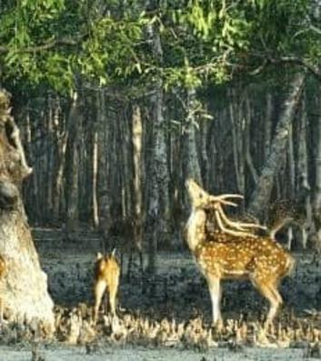 Jungle Safari Tours Sundarbans National Park