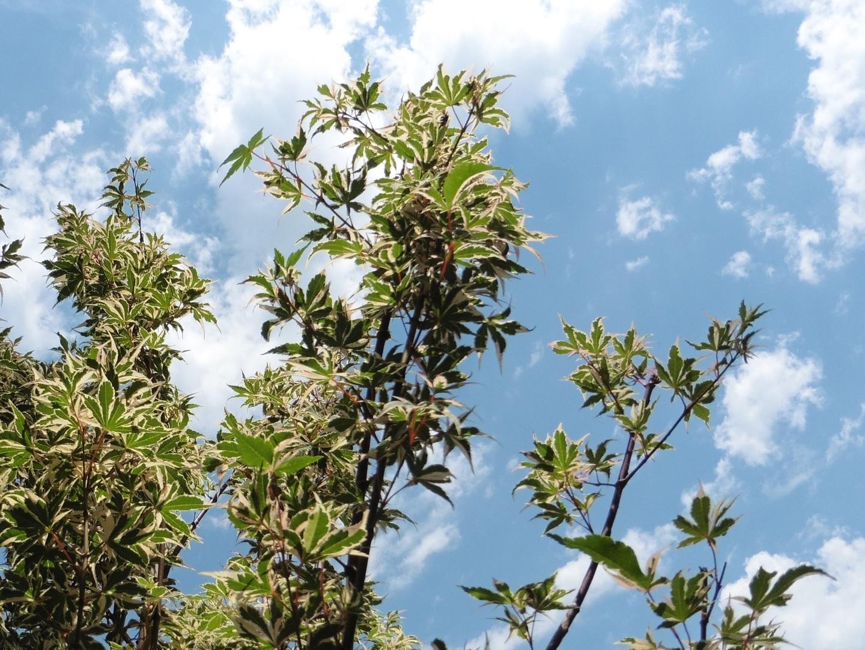 Dabney nursery trees trees for sale ornamental trees over 60 varieties of evergreen trees izmirmasajfo