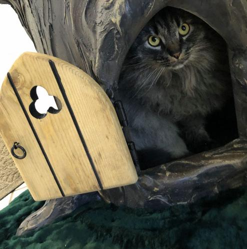Large Cat Tree for Maine Coon Cats