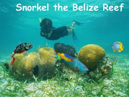 A boy snorkels at the Belize barrier reef among colorful corals and tropical fish. Belize Vacation Packages