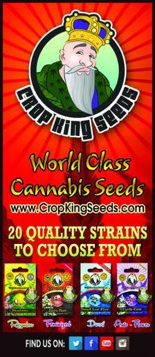 Crop Kin Seeds at Time4Hemp