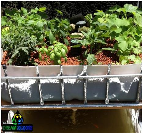 The DREAM Commercial Aquaponics Module is delivered with everything