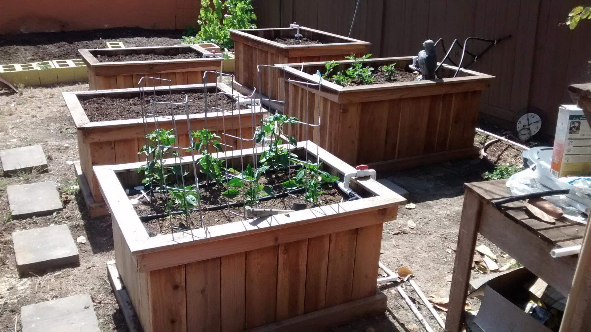 cedar- custom raised gardens - raised garden bed design, cedar