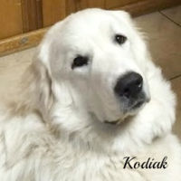 Kodiak Wells Providence Great Pyrenees