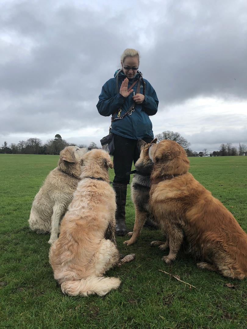 Puppy School Top Dog Training School