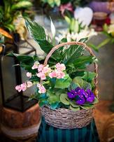 Blooming Basket 2