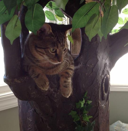 Sturdy Cat Trees