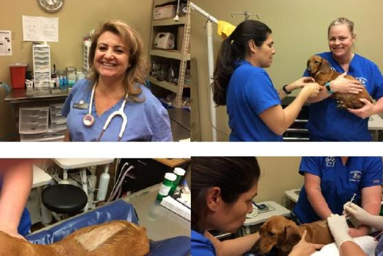 Junie Prepping for her injections at Grand Paws Animal Clinic