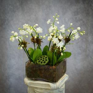 Miniature White Orchid