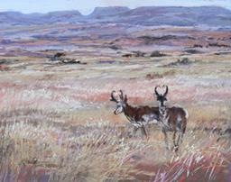 Home on the Range, pronghorn antelope painting by Lindy Severns