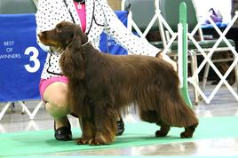 Canine Conformation Classes