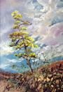 Century Bloom, miniature pastel by Texas artist Lindy C Severns, Old Spanish Trail Studio, Fort Davis TX