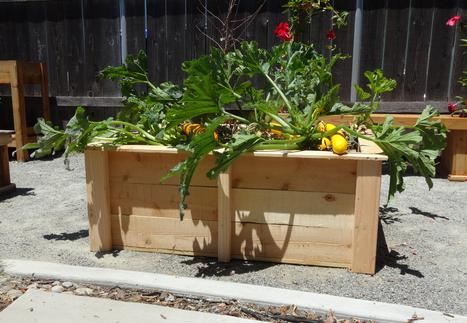 Gronomics - Three Tier 34 x 95 x 80 Raised Garden Bed with ...