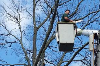 Tree Removal Lancaster Pa