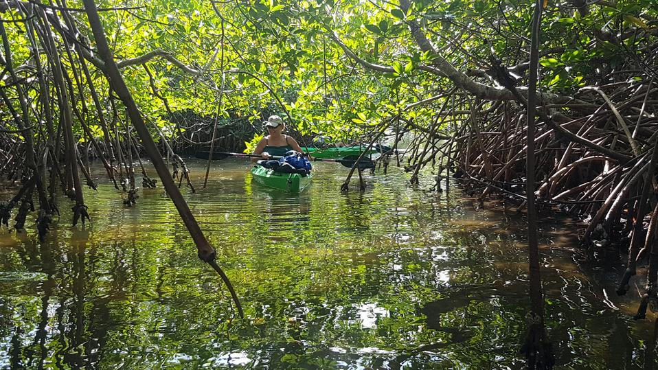 A woman kayaks through mangrove channels connected various lagoons filled with manatees, ray, crocodiles and other lagoon life. Book your Belize Adventure Tours Today