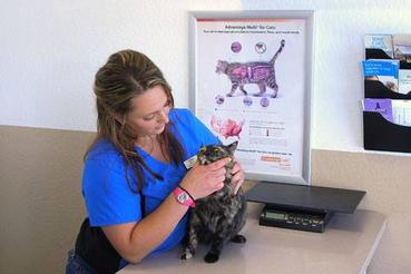 Shingle Springs Veterinary Clinic is a full service animal Hospital