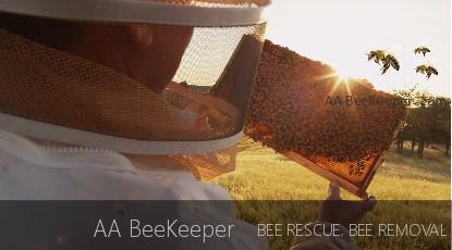 Chula Vista Bee Removal Services
