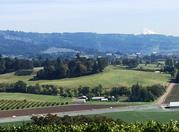Limo tours to wineries in Portland and the Williamette Valley