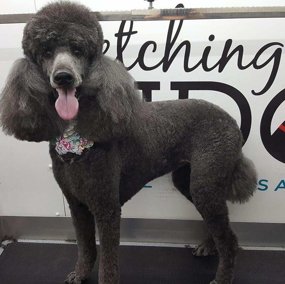 Mobile dog grooming dog groomers fetching fido calgary ab miikkaslife fetching fido solutioingenieria Choice Image