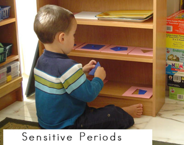 sensitive periods in childhood development - Montessori Print Shop