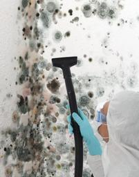 Mold Remediation. Hiring a Mold Removal Professional. How to test for mold. How to remove black mold.