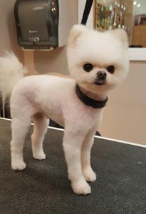 Dandys pet grooming st petersburg fl dandys policys dandy dog wash solutioingenieria Images