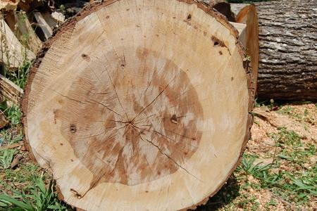 Northern Hickory lumber